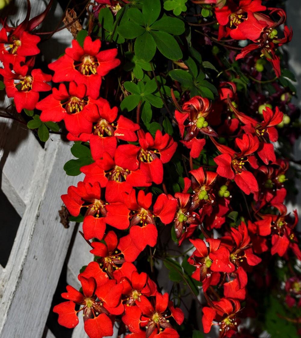花卉日记之---4_图1-7