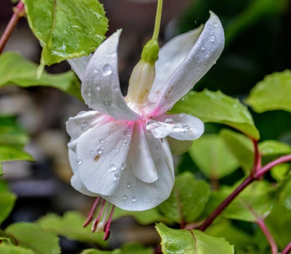 花卉日记之---4_图1-14