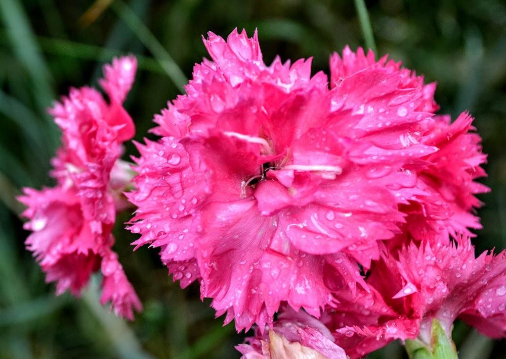 花卉日记之---4_图1-15