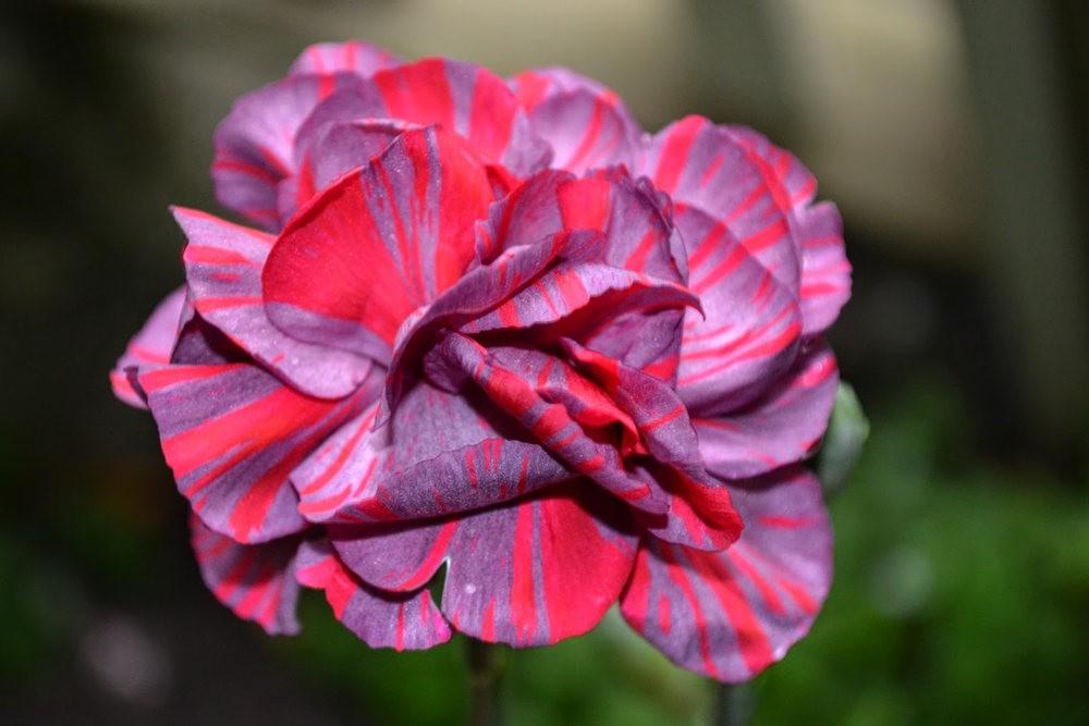 花卉日记之---4_图1-16