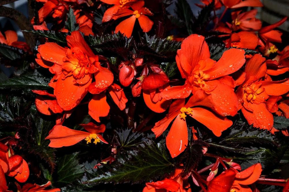 花卉日记之---4_图1-17