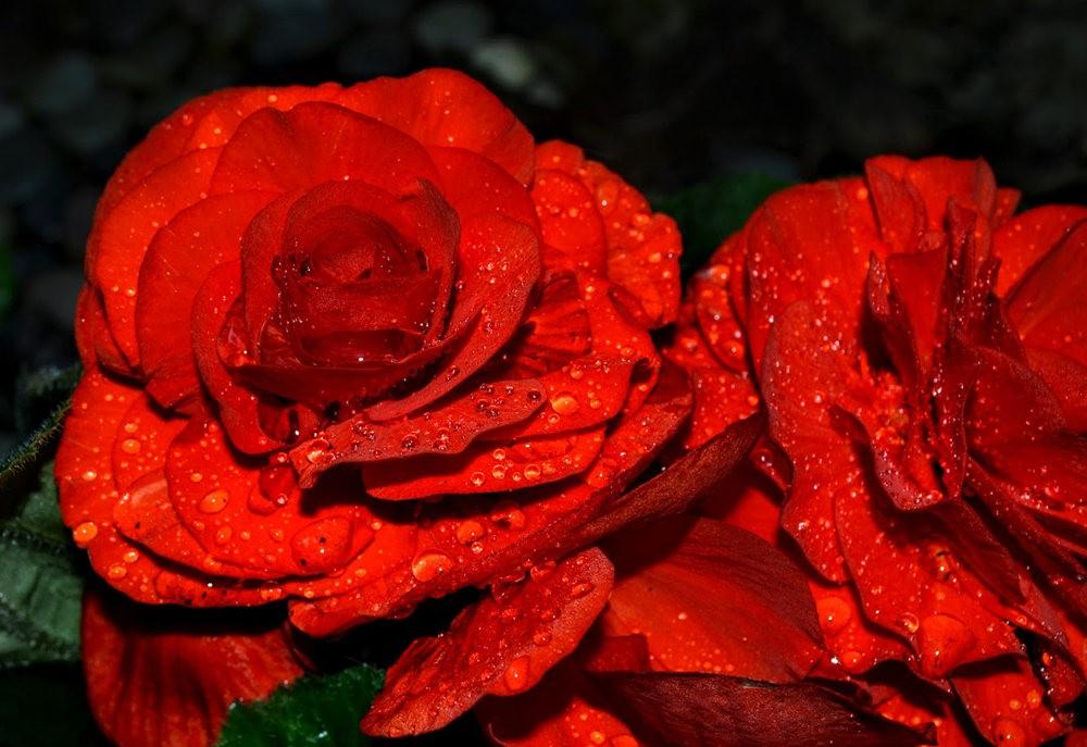 花卉日记之---4_图1-18