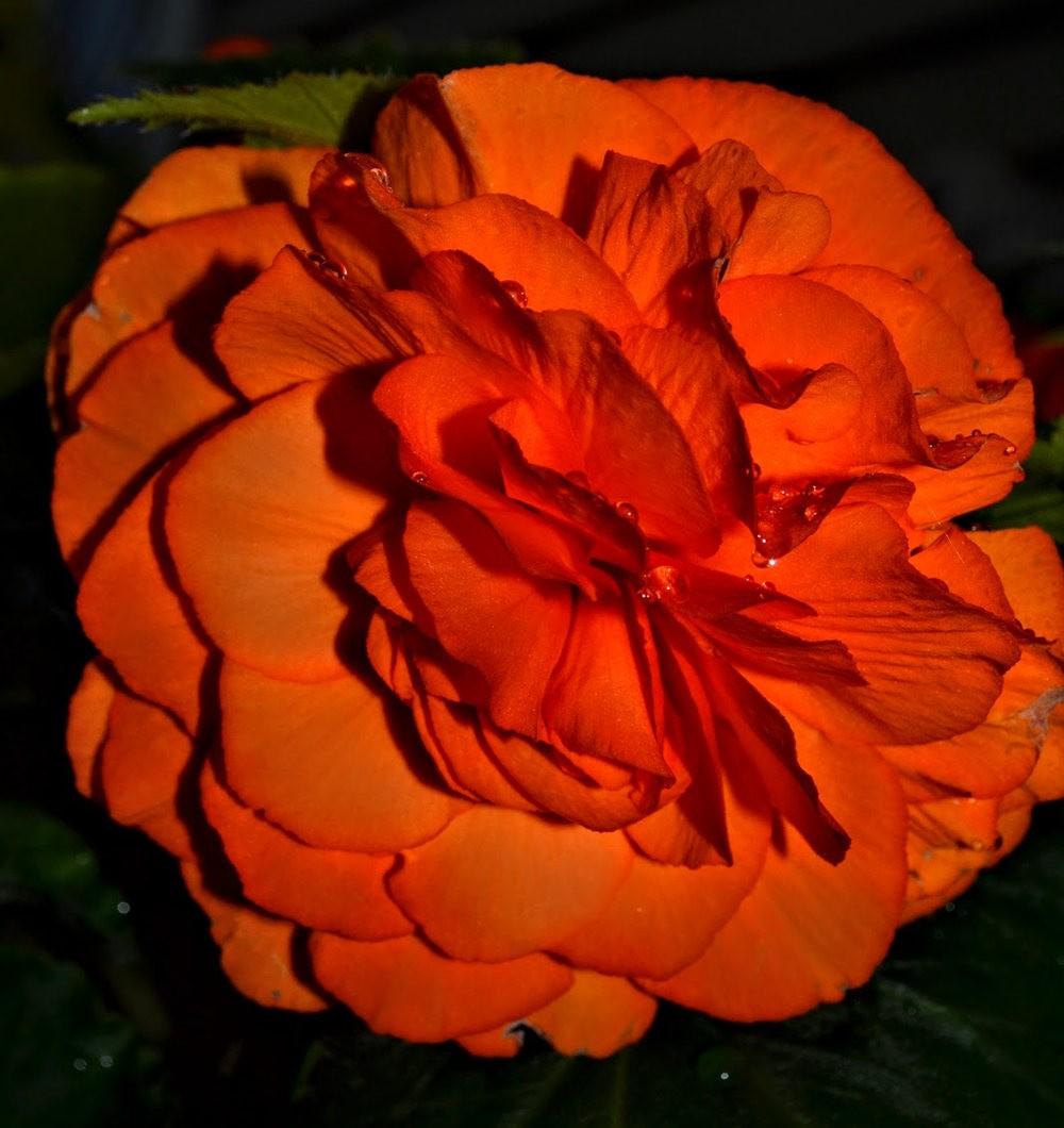 花卉日记之---4_图1-19