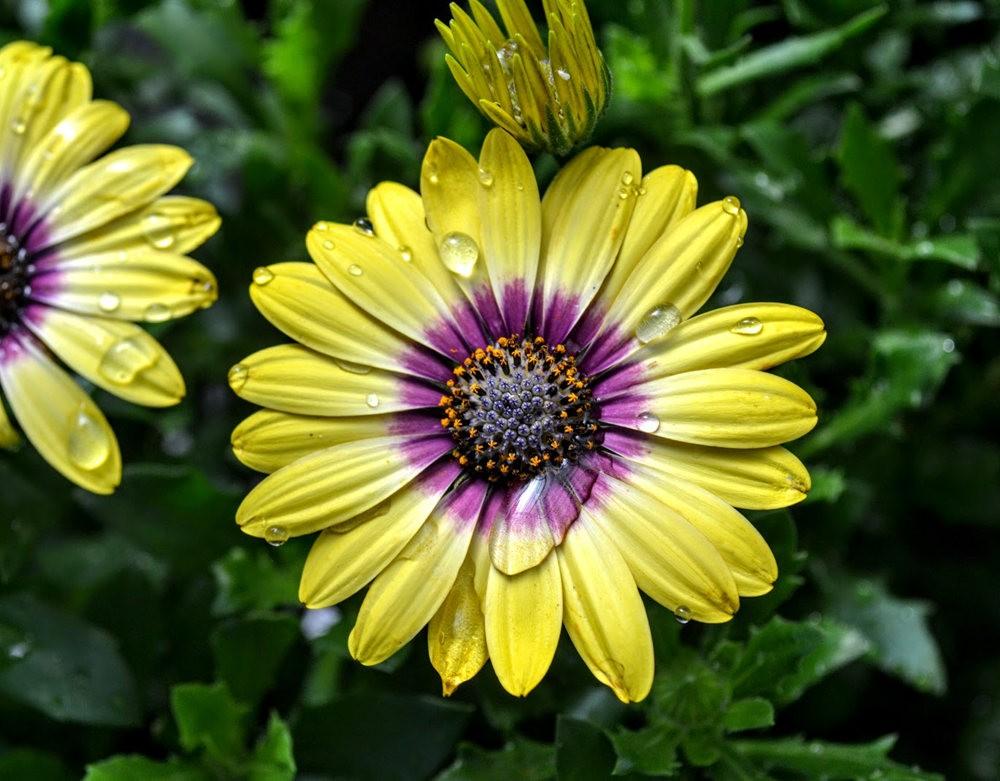 花卉日记之---4_图1-24