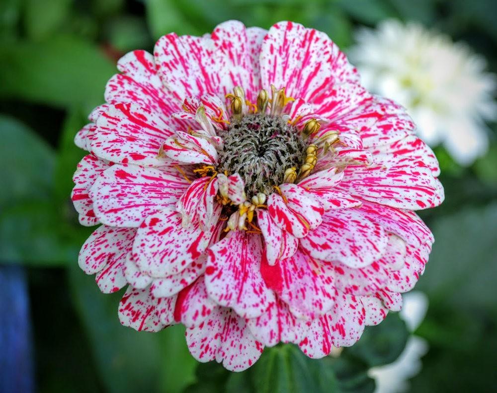 花卉日记之---4_图1-25