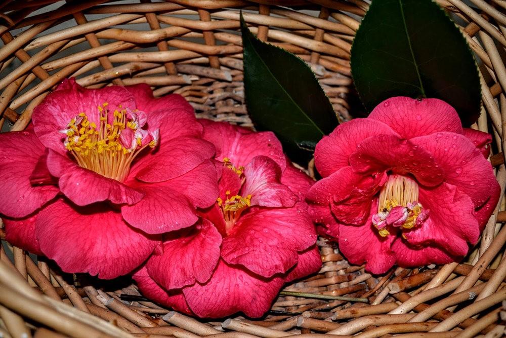 花卉日记之---莫尔巴克苗圃_图1-2