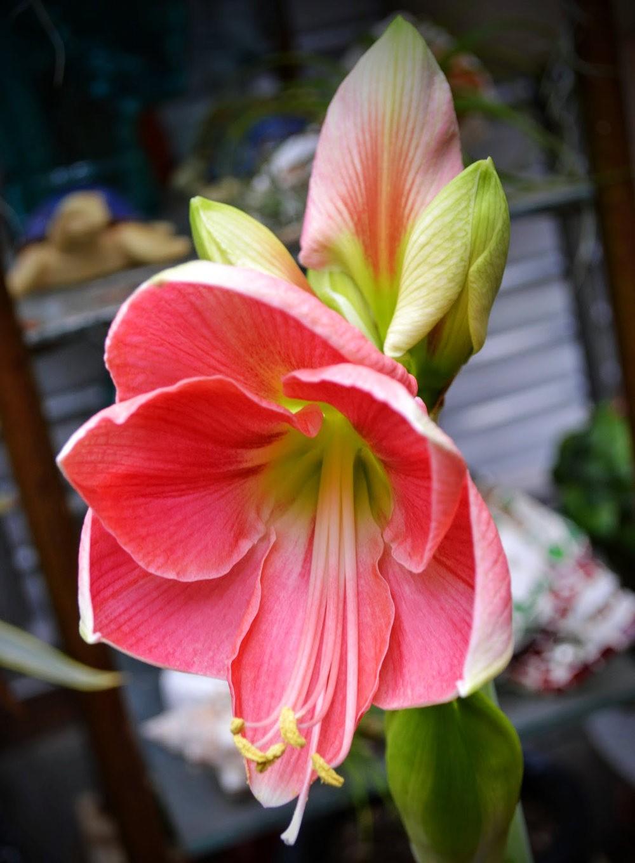 花卉日记之---莫尔巴克苗圃_图1-9