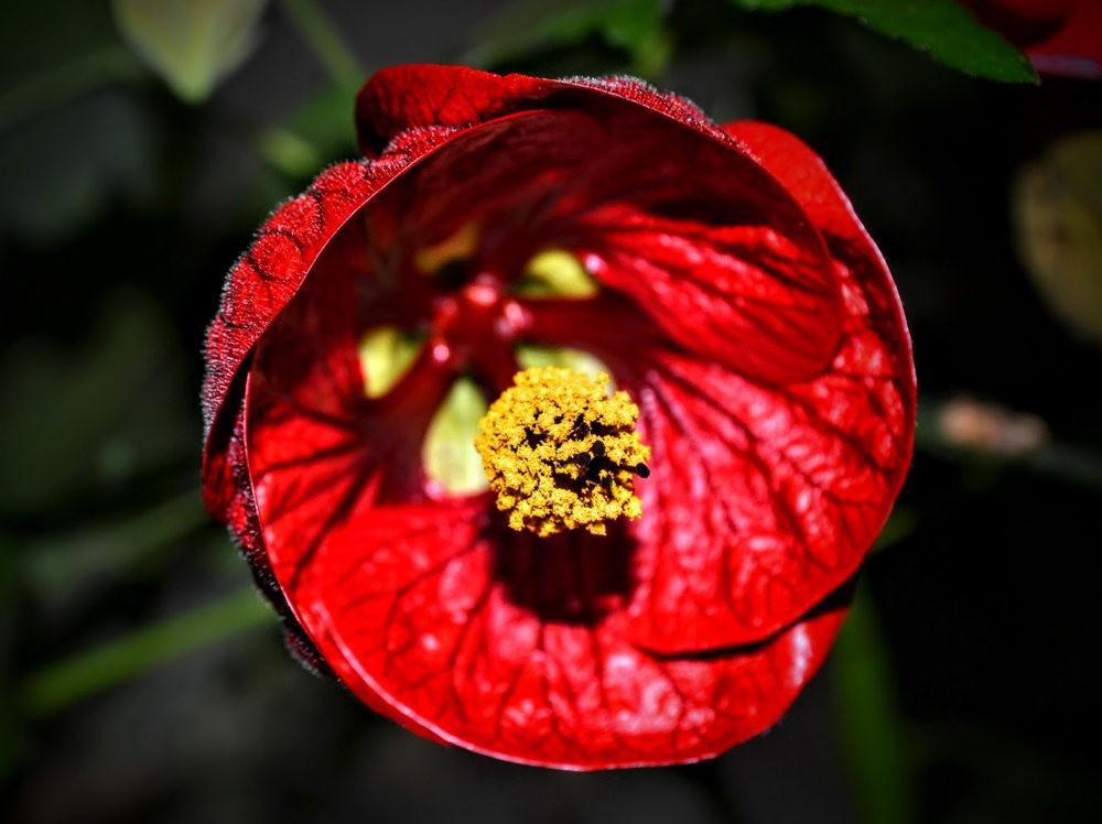 花卉日记之---莫尔巴克苗圃_图1-14