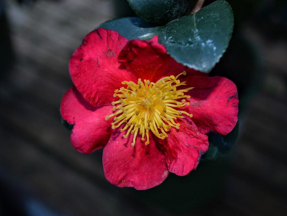 花卉日记之---莫尔巴克苗圃_图1-16
