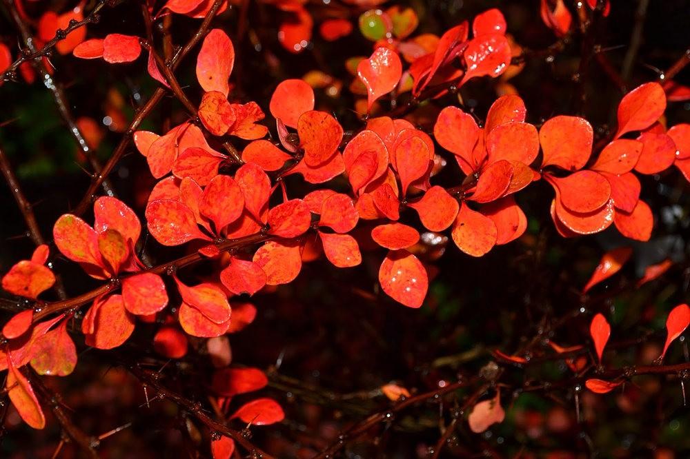 花卉日记之---莫尔巴克苗圃_图1-24