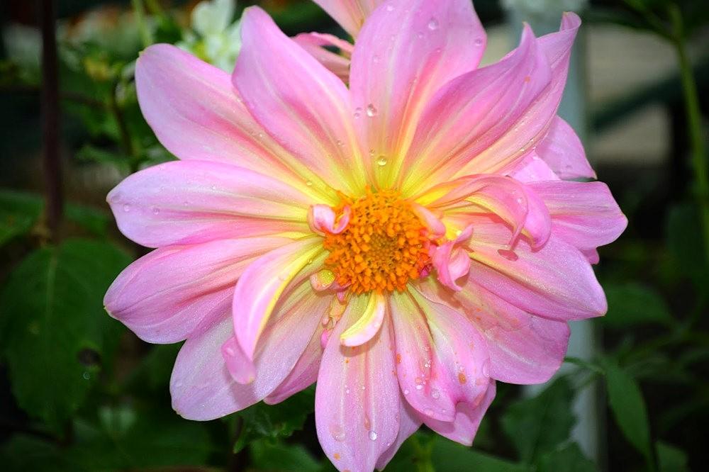 花卉日记之---莫尔巴克苗圃_图1-25
