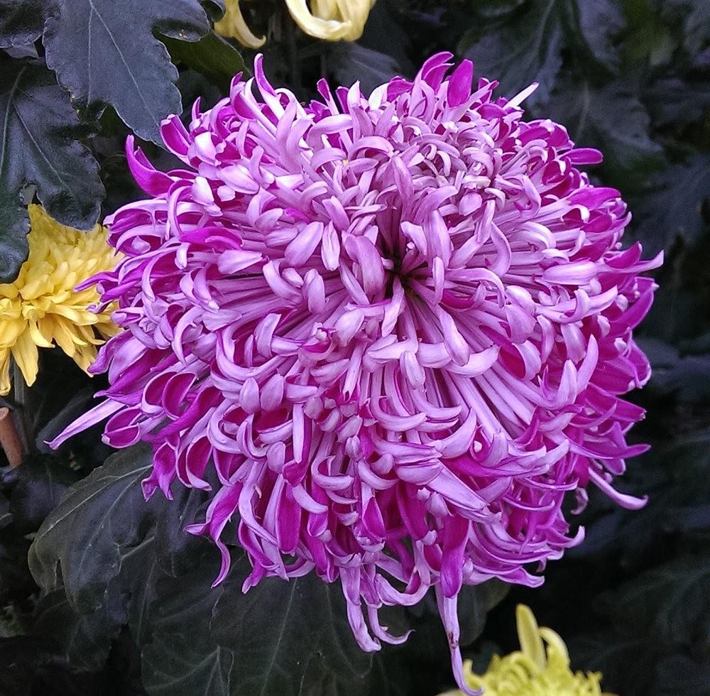 花卉日记之---莫尔巴克苗圃_图1-30