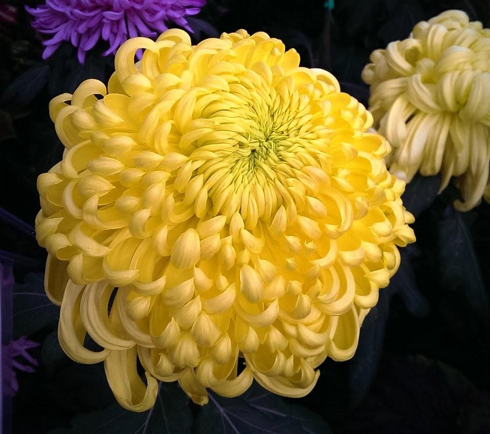 花卉日记之---莫尔巴克苗圃_图1-31