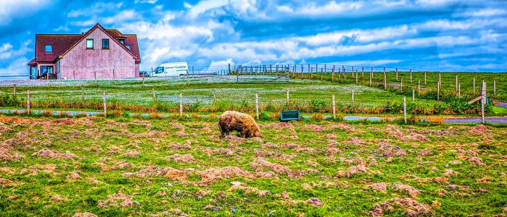 苏格兰奥克尼岛(Orkney Islands),田园牧歌_图1-13