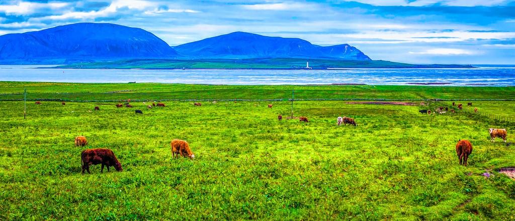 苏格兰奥克尼岛(Orkney Islands),田园牧歌_图1-15