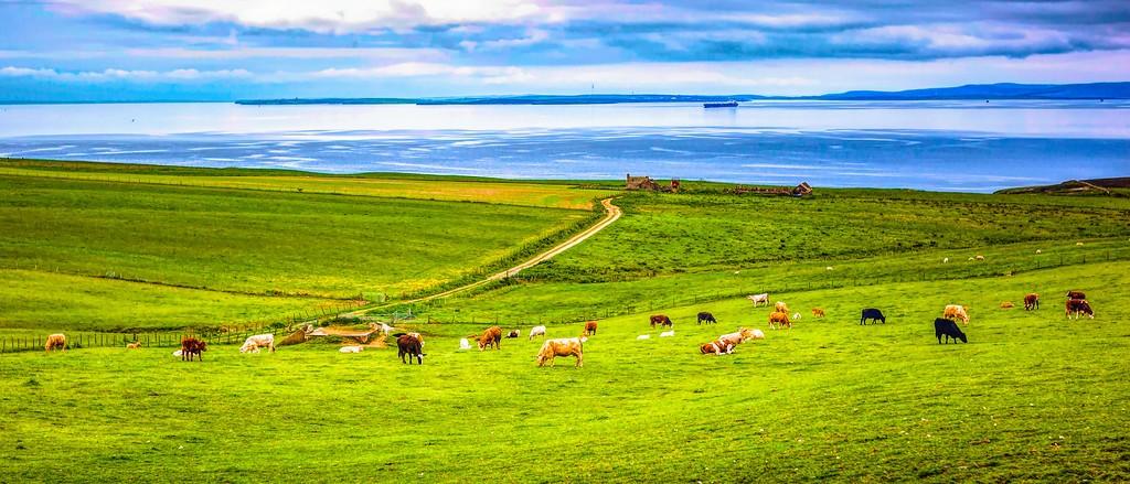 苏格兰奥克尼岛(Orkney Islands),田园牧歌_图1-14