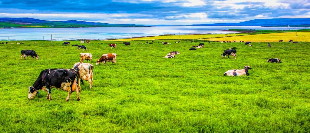 苏格兰奥克尼岛(Orkney Islands),田园牧歌_图1-9
