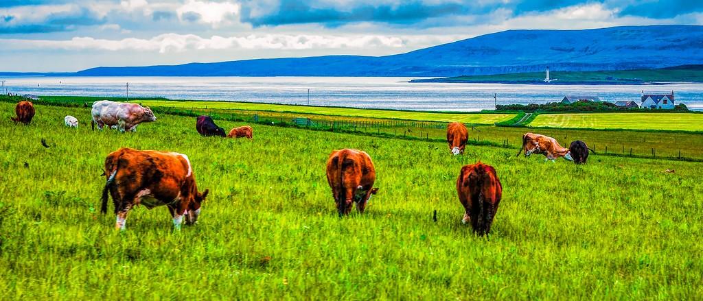 苏格兰奥克尼岛(Orkney Islands),田园牧歌_图1-11