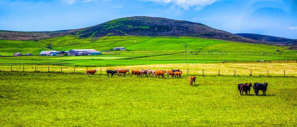 苏格兰奥克尼岛(Orkney Islands),田园牧歌_图1-12
