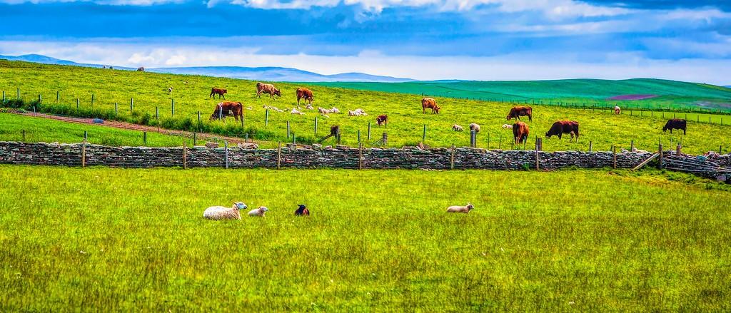 苏格兰奥克尼岛(Orkney Islands),田园牧歌_图1-6