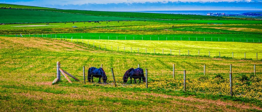 苏格兰奥克尼岛(Orkney Islands),田园牧歌_图1-5