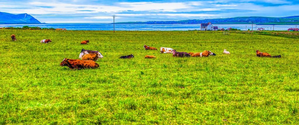 苏格兰奥克尼岛(Orkney Islands),田园牧歌_图1-8