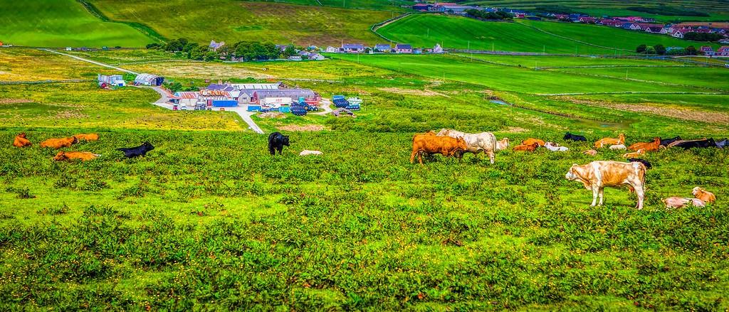 苏格兰奥克尼岛(Orkney Islands),田园牧歌_图1-3