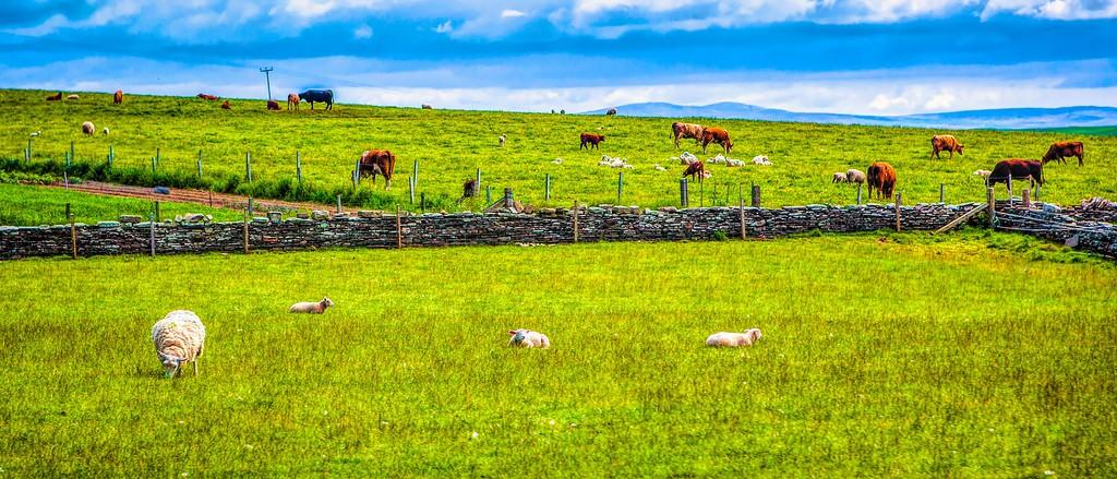 苏格兰奥克尼岛(Orkney Islands),田园牧歌_图1-19