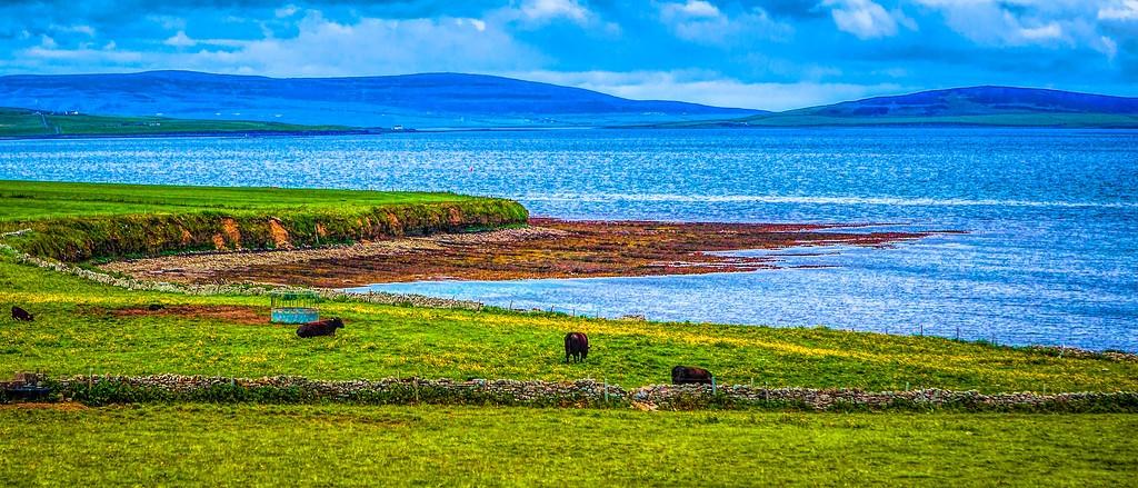 苏格兰奥克尼岛(Orkney Islands),田园牧歌_图1-17