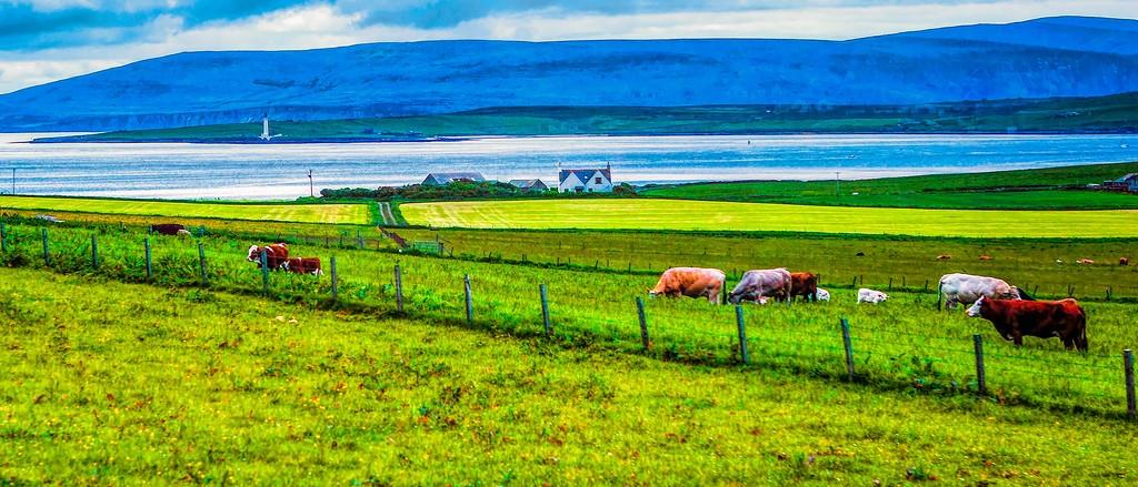 苏格兰奥克尼岛(Orkney Islands),田园牧歌_图1-21