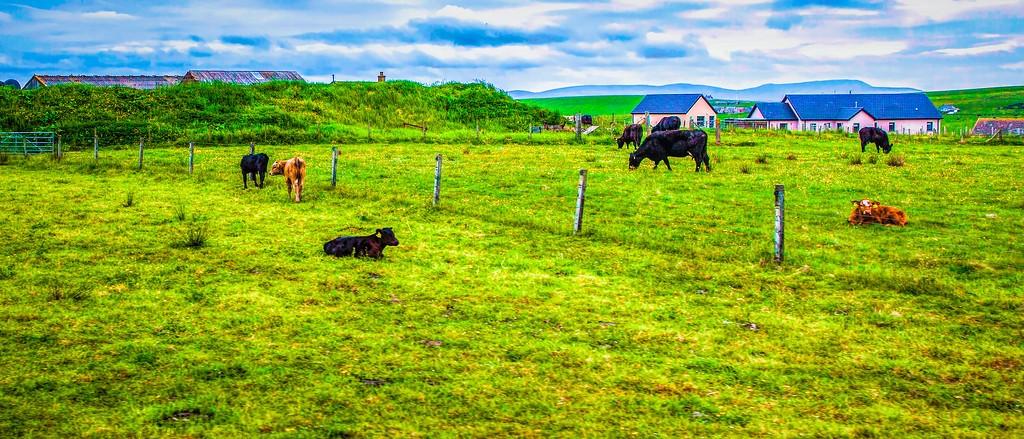 苏格兰奥克尼岛(Orkney Islands),田园牧歌_图1-23