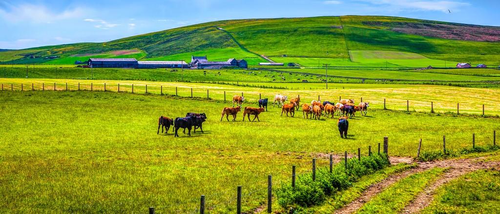 苏格兰奥克尼岛(Orkney Islands),田园牧歌_图1-24