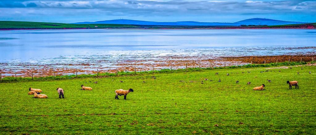 苏格兰奥克尼岛(Orkney Islands),田园牧歌_图1-28