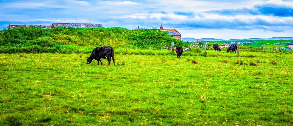 苏格兰奥克尼岛(Orkney Islands),田园牧歌_图1-25