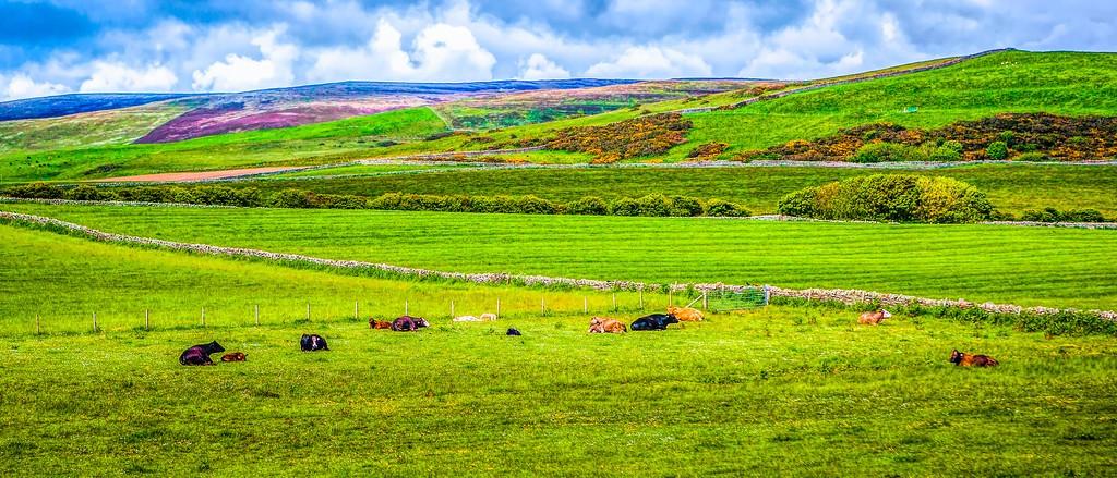 苏格兰奥克尼岛(Orkney Islands),田园牧歌_图1-27