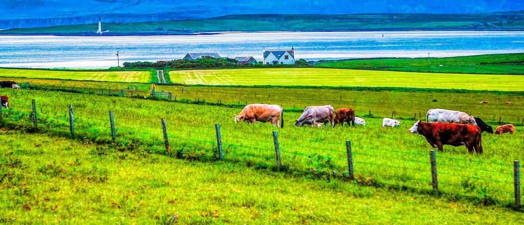 苏格兰奥克尼岛(Orkney Islands),田园牧歌_图1-29