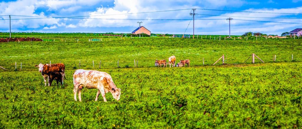 苏格兰奥克尼岛(Orkney Islands),田园牧歌_图1-26