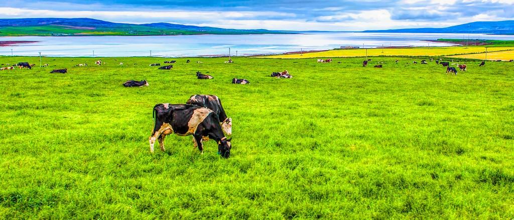 苏格兰奥克尼岛(Orkney Islands),田园牧歌_图1-34