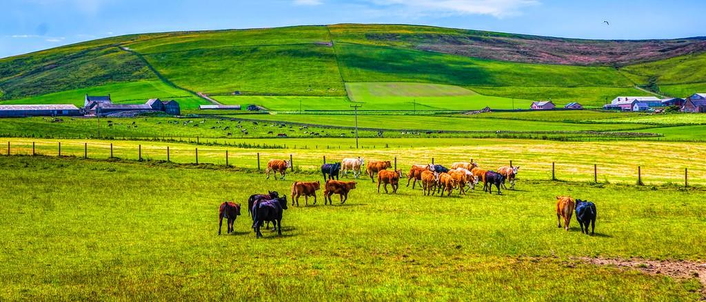 苏格兰奥克尼岛(Orkney Islands),田园牧歌_图1-32