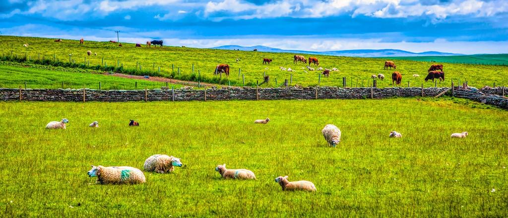 苏格兰奥克尼岛(Orkney Islands),田园牧歌_图1-30
