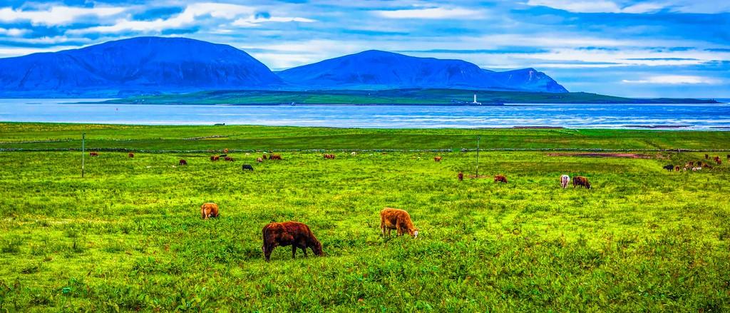苏格兰奥克尼岛(Orkney Islands),田园牧歌_图1-33