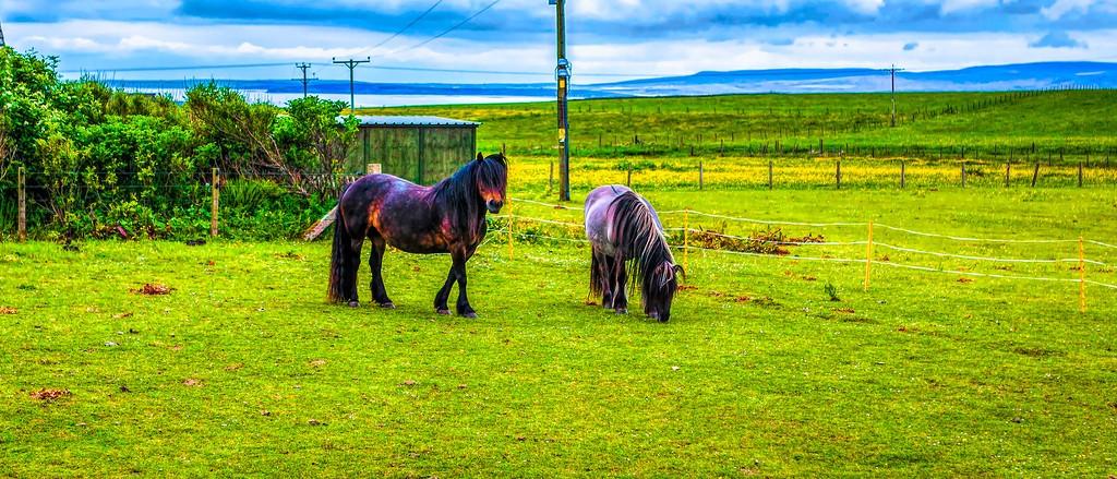 苏格兰奥克尼岛(Orkney Islands),田园牧歌_图1-35