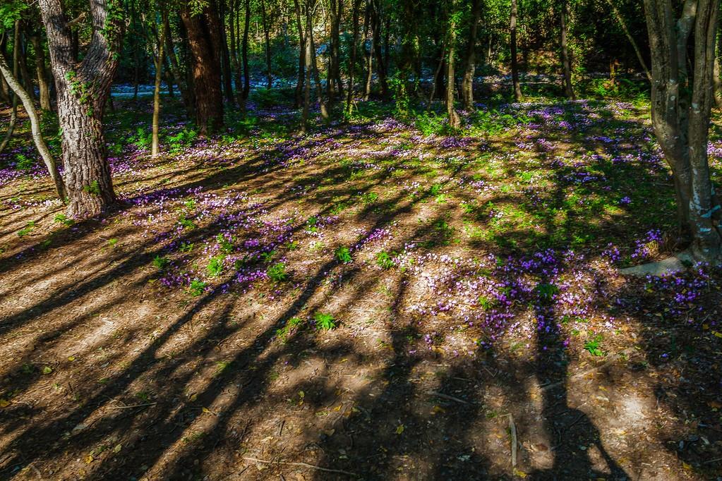 克罗地亚克尔卡国家公园(Krka National Park),脚下的瀑布_图1-10