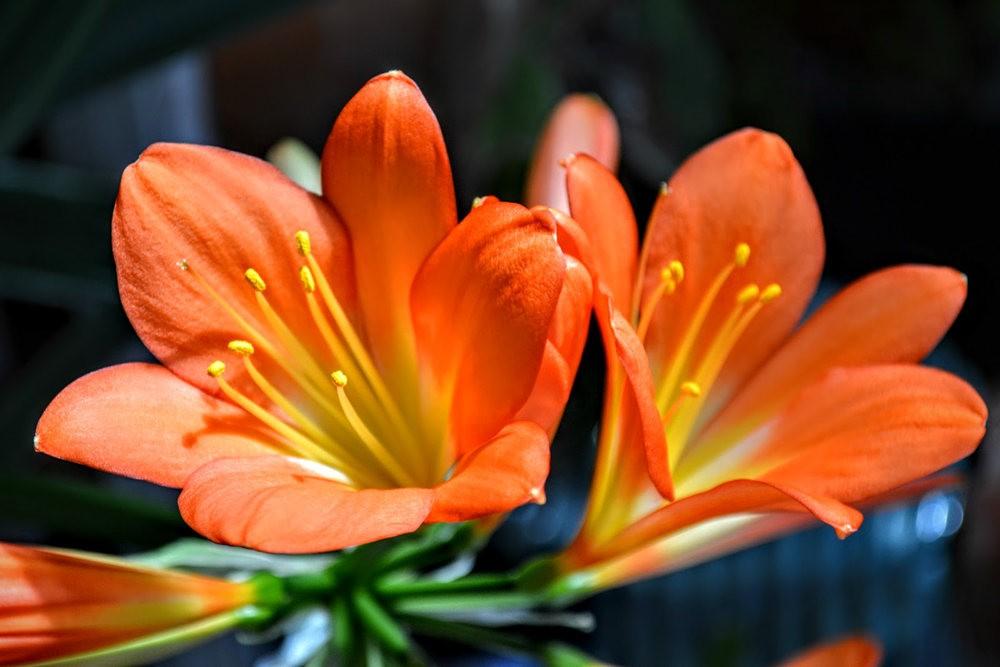花卉日记之---6_图1-1