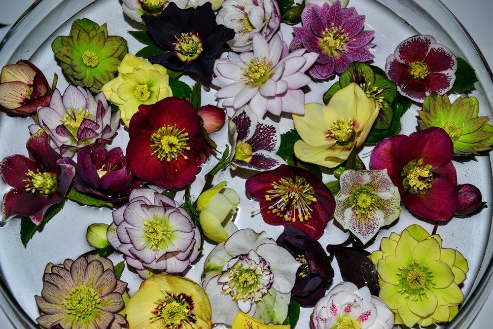 花卉日记之---6_图1-6