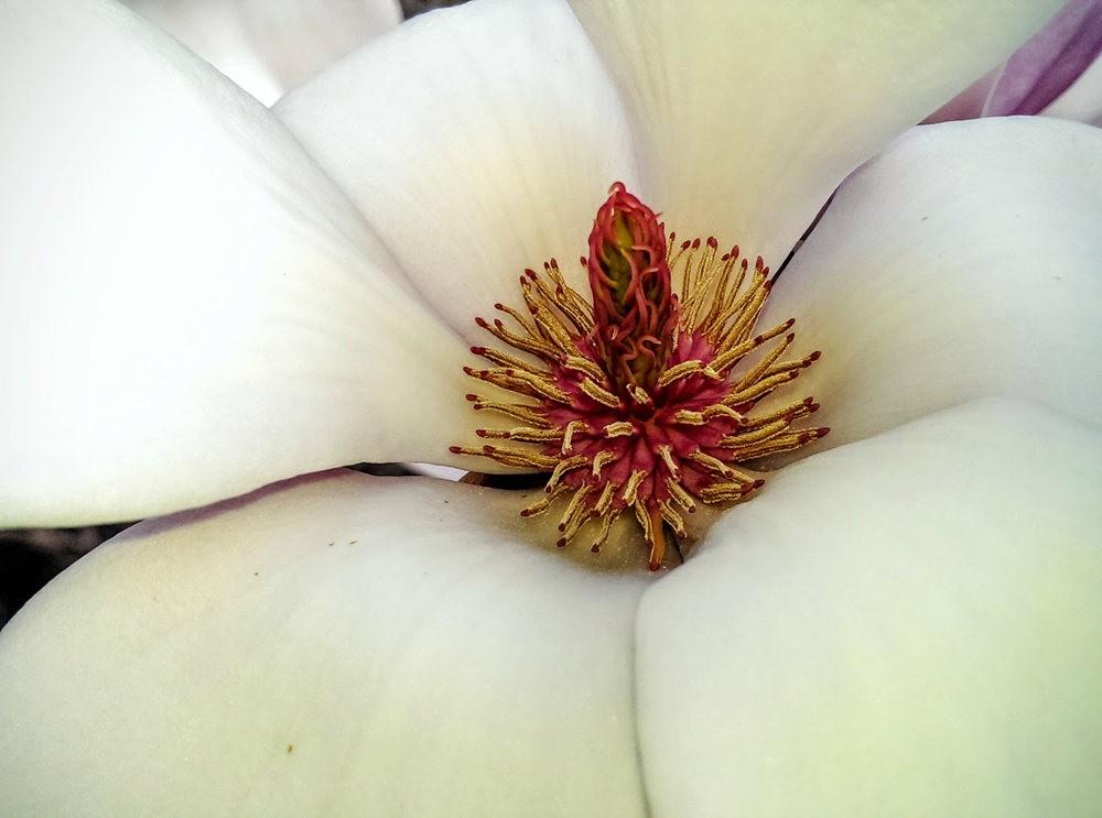 花卉日记之---6_图1-7