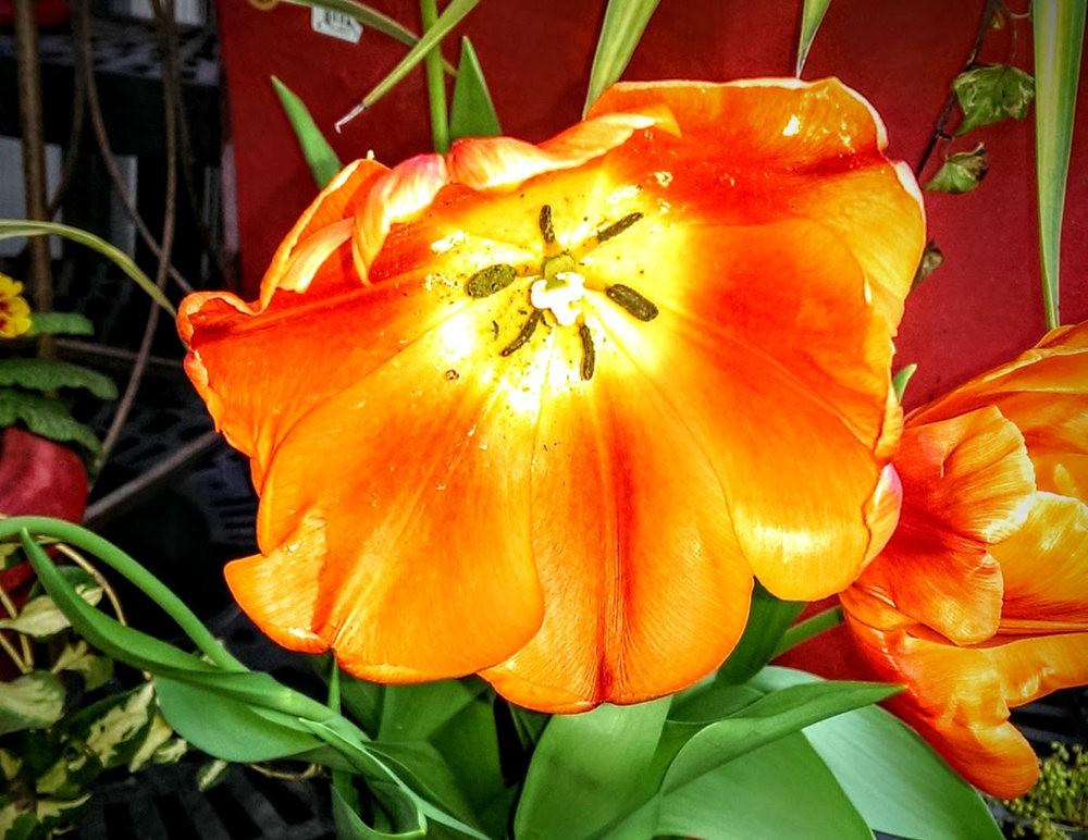 花卉日记之---6_图1-8