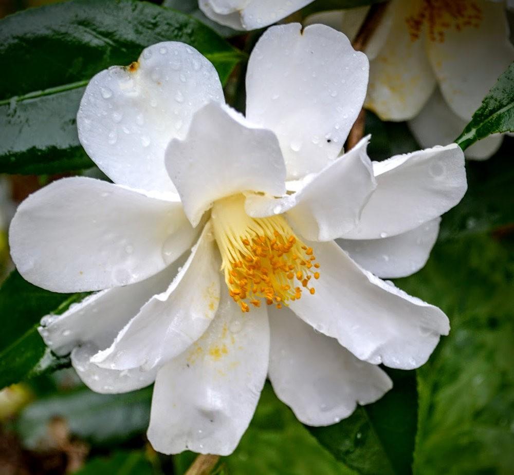 花卉日记之---6_图1-11