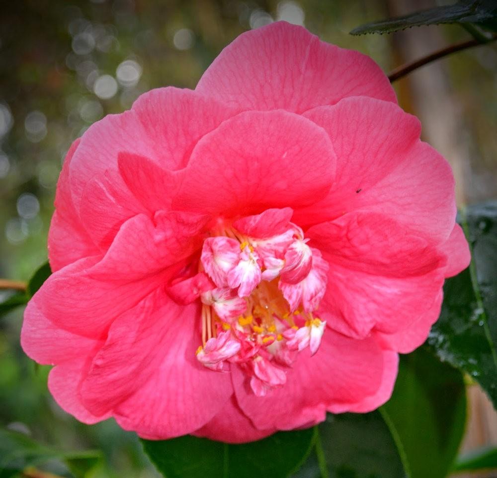 花卉日记之---6_图1-12