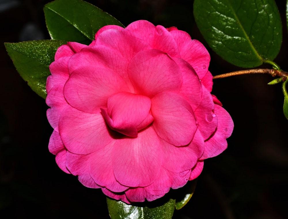 花卉日记之---6_图1-13